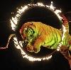 Цирки в Михайловске