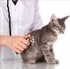 Ветеринарные клиники в Михайловске